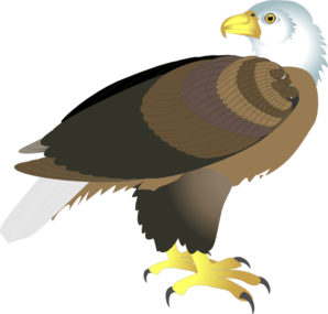Eagle standing. Clip art at clker