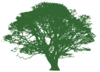 Tree For Invitation Clip Art