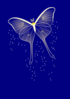 Butterfly In The Night Clip Art