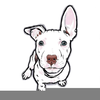 Pit Bull Cartoon Clipart Image
