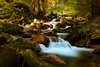 Mountain Stream In Forest Image