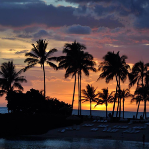 Sunset Beach Palms Image