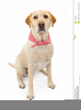 Yellow Lab Clipart Image