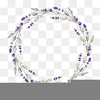 Free Clipart Lavender Image