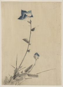 [blue Flower Blossom And Bud At The End Of A Stalk] Image