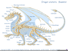 Dragon Skeletal Structure Image