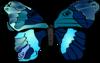 Mariposa Butterfly Clip Art