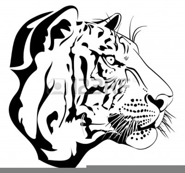 Free Auburn Tiger Clipart Free Images At Clker Com