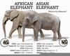 Clipart Of Elephants Image