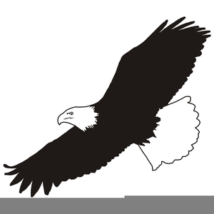 Eagle soaring. Free clipart images at