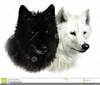 Information About Wolves Clipart Image