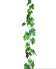 Free Ivy Vine Clipart Image