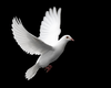 Dove Flying Image