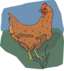 Brown Chicken Looking Back Clip Art