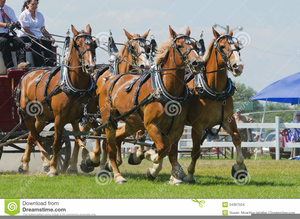 Team Of Horses Clipart Image