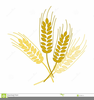 Free Clipart Images Wheat Image