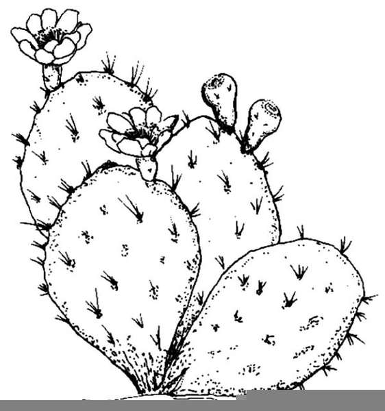 cactus line drawing free images at clkercom vector