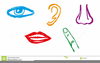 Five Senses Cartoon Clipart Image