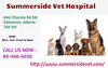 Affordable Veterinary Care Services Summerside Vet Hospital Image