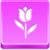 Free Pink Button Tulip Image
