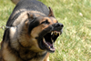 Military Dog Barking Image