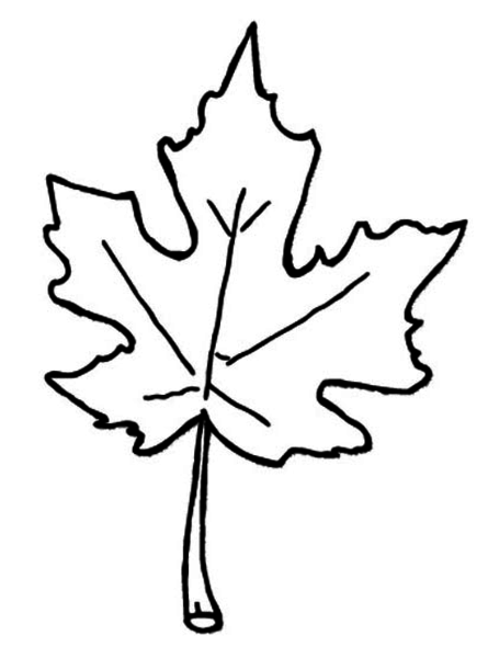 download this image as - Leaves Coloring Page 2