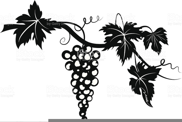 Grape Leaf Clipart Free Images At Clker Com Vector Clip Art Online Royalty Free Public Domain