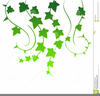 Free Clipart Leaves And Vines Image