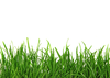 Lawn Care Stock Clipart Image