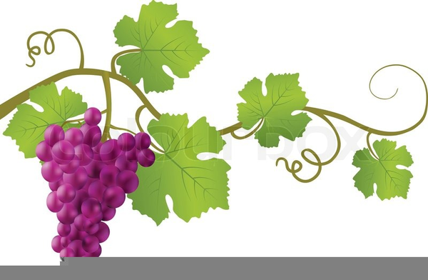 grape vines clipart free images at clker com vector clip art rh clker com grape vine clipart grape vines clipart black and white
