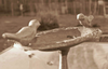 Blog Photo Birds Image