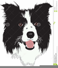 Cartoon Border Collie Clipart Image