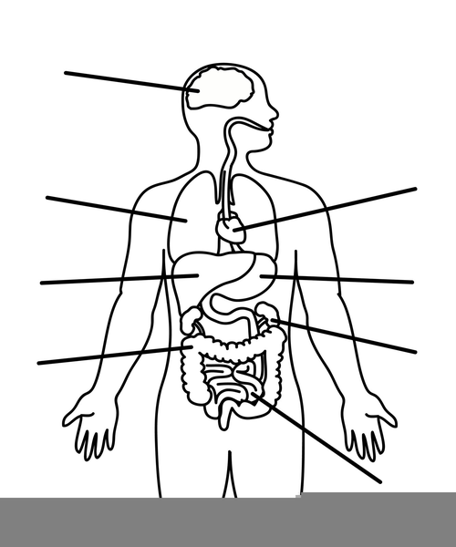 Child Body Diagram Free Images At Clker Com