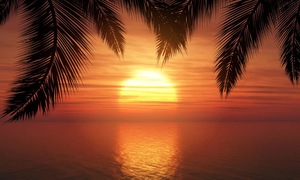 Vector Palm Trees Against Sunset Sky Image