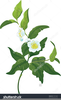 Free Images Of Flowers Clipart Image
