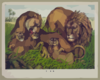The Lion Family Clip Art