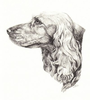 Dog Profile Drawing Image