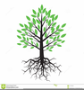 Roots Of A Tree Clipart Image