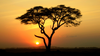 African Tree Sunset Image