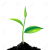 Animated Clipart Of Plant Growing Image