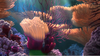 Nemo Coral Reef Image