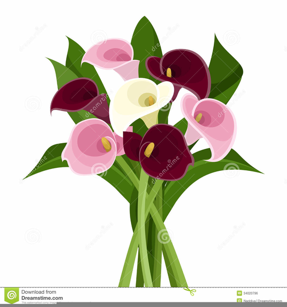 clipart calla lily flower free images at clker com vector clip rh clker com calla lily clipart images calla lily bouquet clipart