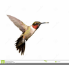 Bird In Flight Clipart Image