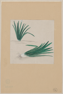 Scallions With Plant Growing In The Background Image