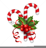 Christmas Holly Free Clipart Image