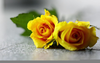 Yellow Roses Wallpaper Image