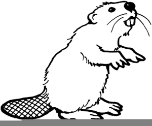 Oregon State Beaver Clipart Free Images At Clker Com