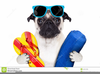 Dog With Sunglasses Clipart Image