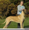 Clipart Great Dane Image