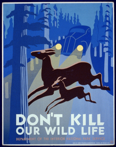 Don T Kill Our Wild Life Image